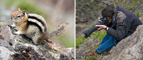 Photographing a Golden Mantled Ground Squirrel