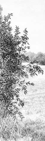 Example of bush drawing