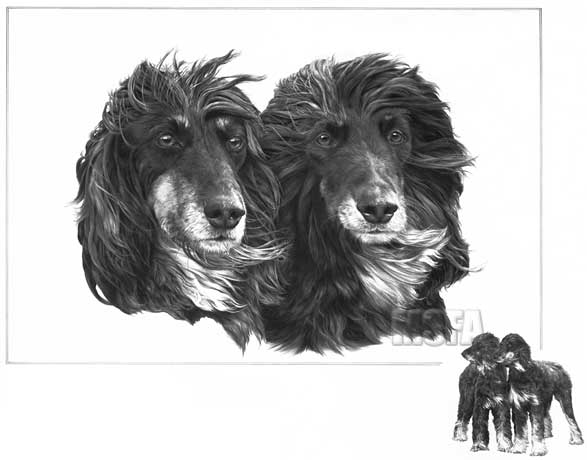 AFGHAN HOUNDS fine art dog print by Mike Sibley