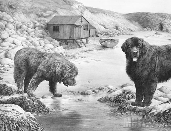 Newfoundland dogs -- 'Whistlers Cove' by Mike Sibley ©