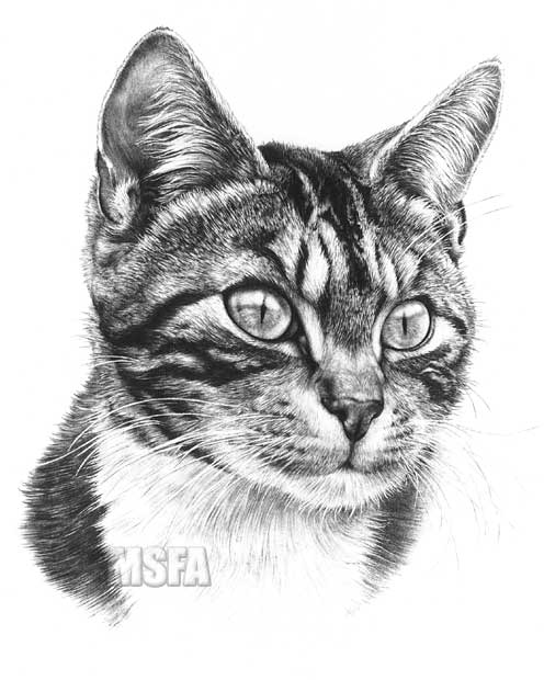 TABBY CAT fine art print by Mike Sibley