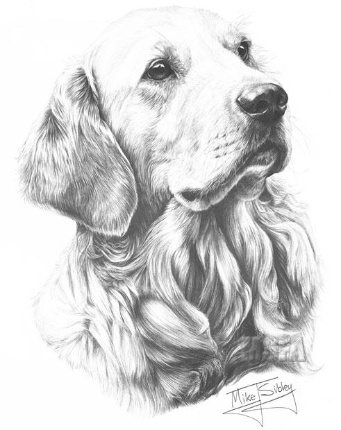 Golden retriever fine art dog print by mike sibley - Dessin golden retriever ...