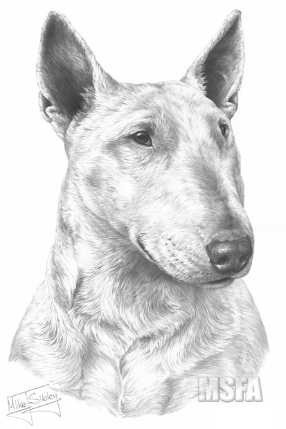 ENGLISH BULL TERRIER fine art dog print by Mike Sibley