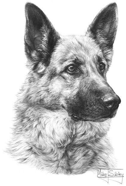 German Shepherd Dog Fine Art Dog Print By Mike Sibley - German-shepherd-drawings