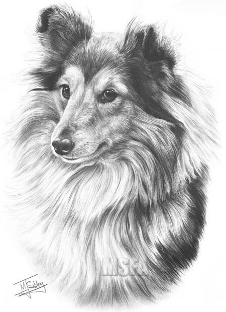 Sheltie/Shetland Sheepdog English Picture Print Sheltie
