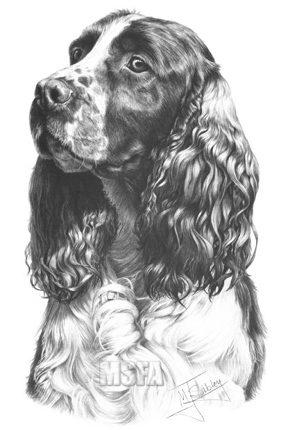 springer spaniel coloring pages - photo#24