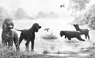 Irish Water Spaniels