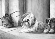 Bearded Collie fine art print