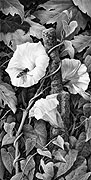 Bindweed and Hoverfly fine art print by Mike Sibley
