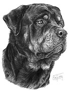 Rottweiler fine art print by Mike Sibley