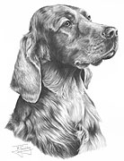 Irish Setter fine art print by Mike Sibley