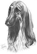 AFGHAN HOUND fine art dog print by Mike Sibley