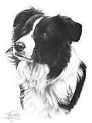 Border Collie fine art print