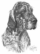 English Setter fine art print by Mike Sibley