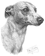 Whippet fine art print by Mike Sibley