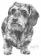 Dachshund (wire hair) fine art print