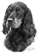 Gordon Setter dog print by Mike Sibley