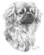 Tibetan Spaniel fine art print by Mike Sibley