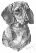 Dachshund (smooth) fine art print