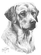 Yellow Labrador fine art print by Mike Sibley