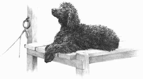 Irish Water Spaniel remarque applied to a limited edition print by Mike Sibley
