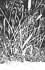 grass negative drawing