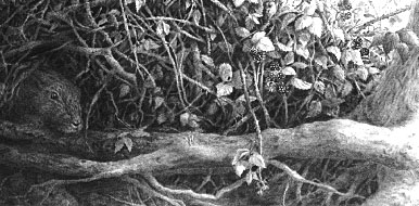 Negative drawing of Brambles and Roots