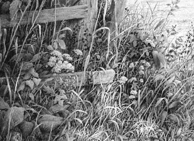 Negative drawing of Foliage and Weeds