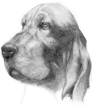 Desenhando Pelos De Animais Dicas De Mj Sibley A