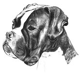 Boxer drawing 1978