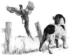 Springer  amp Pheasant...