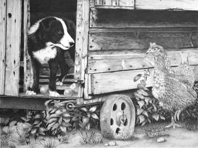 Grahame's Border Collie Pup and Hen graphite pencil drawing