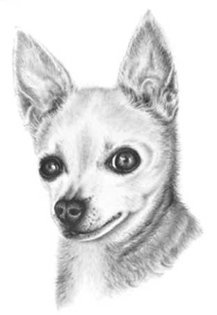 Liz - dog drawing
