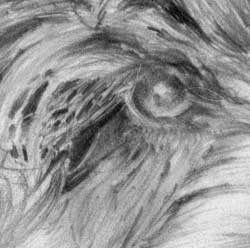 one eye of the 'Cockapoo' by Mark
