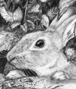 detail of rabbit