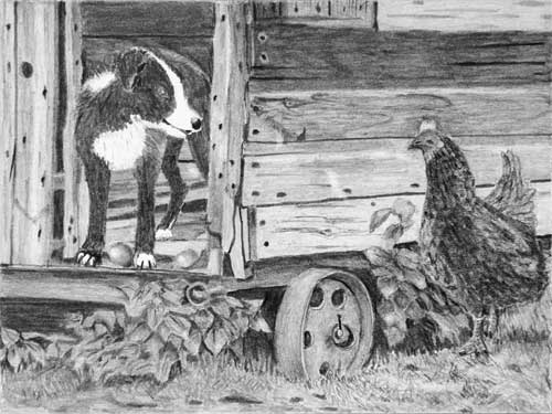 Tony's 'Henhouse Raider' drawing