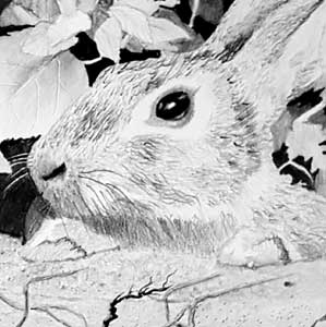 Detail of rabbit in pencil drawing
