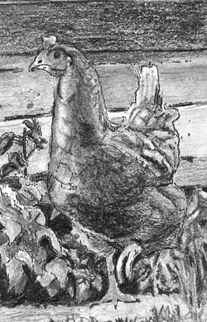 Hen from Elizabeth's drawing - Drawspace Intermediate online drawing course