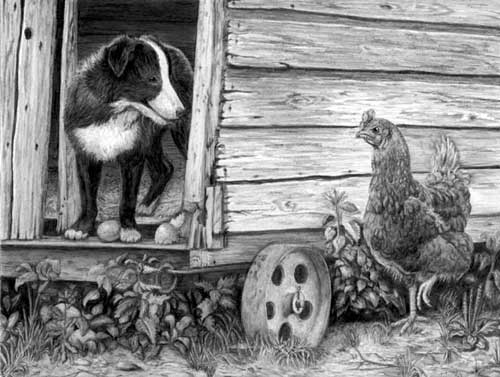'The Hennhouse Raider' - pencil drawing by Mary