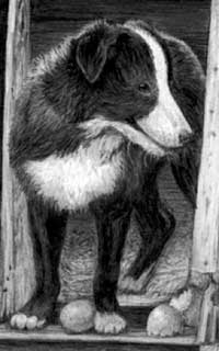 Robbie the dog from pencil drawing by Mary
