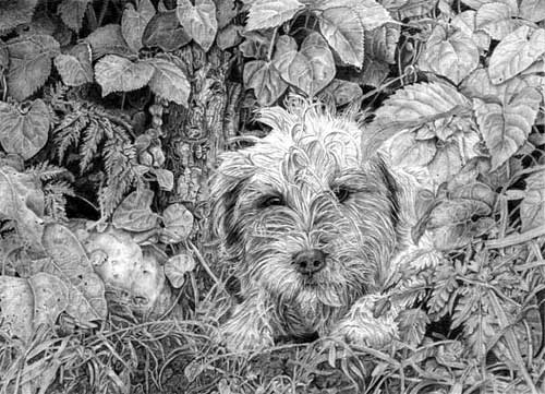 'Buster' graphite pencil drawing by Rob Bristow - www.RobBristowFineArt.com